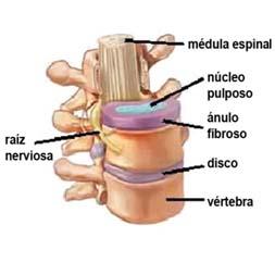 vertebras-de-la-columna-vertebral